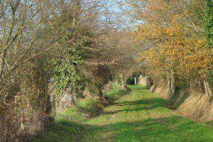 Chemin de Touche-Belin .Daon